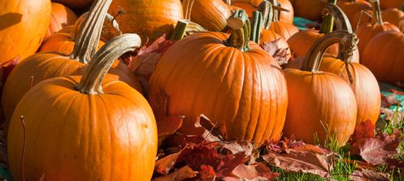 Pumpkin Patch at Rosedale